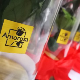 Örökrózsa üvegburában az Amorosa-tól (3 szálas)